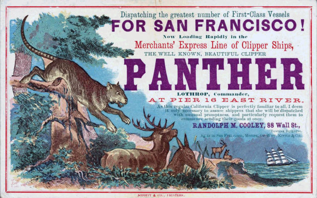 Panther Clipper Card
